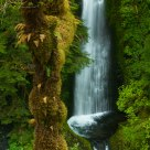 Moss, Ferns and Falls