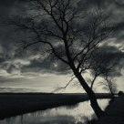 Melancholic tree