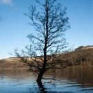 Water Tree
