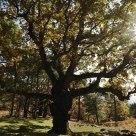 Haya en otoño