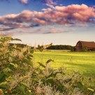 Summer Time on the Farm
