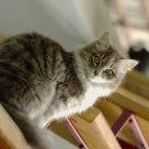 El gato en la escalera