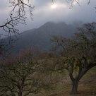 Mt. Diablo & Fog