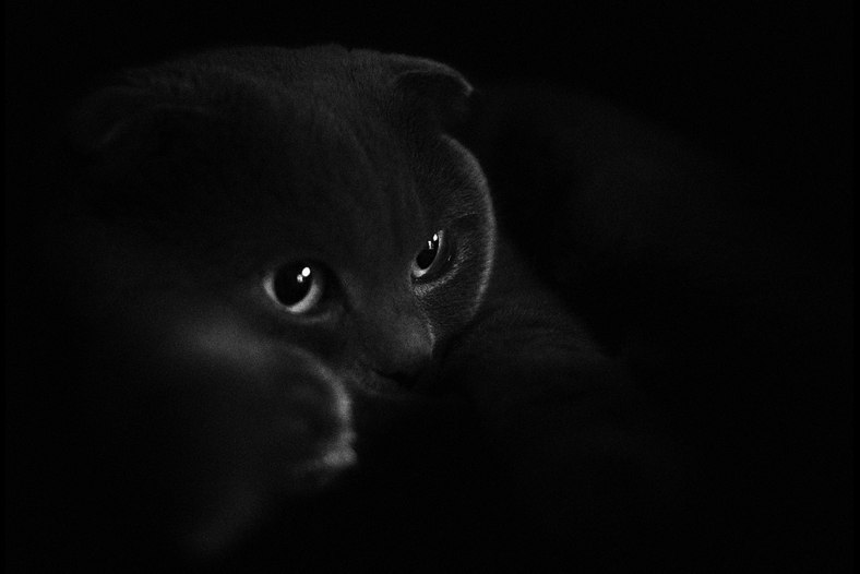 gray cat in a dark room
