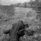 A Gator's point of view