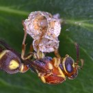 The Guarding Wasp
