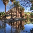Palm Creek Reflections