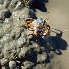 crabersome