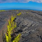 life taking root in lava fields