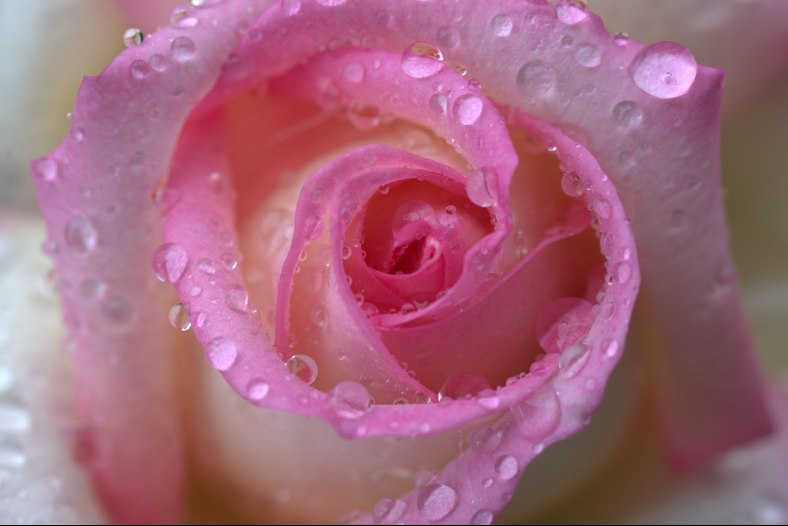 Pink and Raindrops