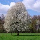 Spring / Frühling