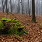 Deep Wood I
