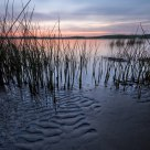 Reeds & Ripples