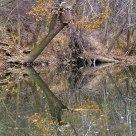 Big River Reflection