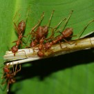 The Ant Life - Synergize