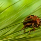 a sort of ladybird