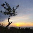Pinery Sunset