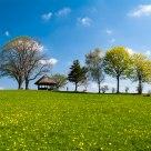 Dandelion Pastures