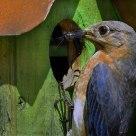 Bluebird Gourmet