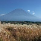 Mt.Fuji and Feather Grass