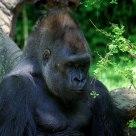 Gorillamydreemz
