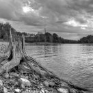 Stump at Patoka Lake