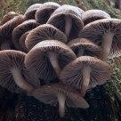 Mushroom Jam