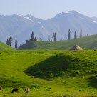 Beautiful Nalati Grassland