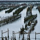 Mussels farm