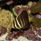 Reef Living