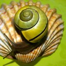 Caracol e a concha (Snail and the shell)