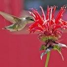 Hummingbird diner