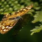Butterfly - II