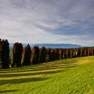 RJ hamer forest arboretum