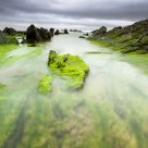Barrika in green