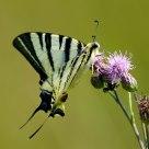 Nectar 2