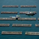 Oyster farm at sea