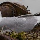 Seagull in the rain.