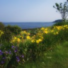 Summer Flower Garden by the Sea