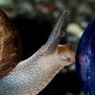 Snail Narcissism