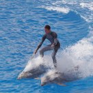 Riding Dolphins