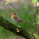 Robin ........................................... Interlude