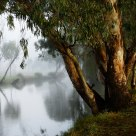 Banks of the Condamine
