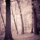 Infra forest