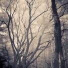 Infra forest II