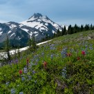 Mt. Jefferson Wildflowers