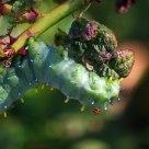 Loathsome Larva