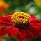Çiçek-1