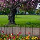 London Park, Summer