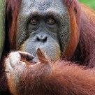 Pentax Q - The thinking ape